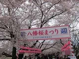 淀川河川公園背割提桜 (2).JPG